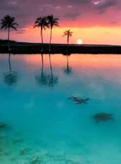Sunset at Kiholo Bay, Hawaii.: Bucket List, Sunsets, Sunrise Sunset, Places, Beach, Travel, Sea Turtles, Hawaii
