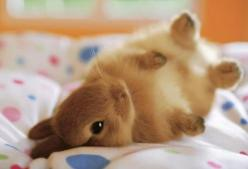 sweetness :): Rabbit, Cutenes, Adorable Animals, Baby Bunnies, Pets, Box, Things, Baby Animals