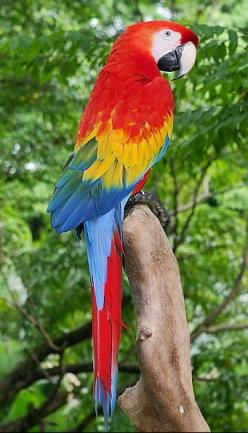 The best colour combinations are those that Nature approves!: Colorful Birds, Exotic Birds, Scarlet Macaw, Parrots, Google Search, Beautiful Birds, Animal