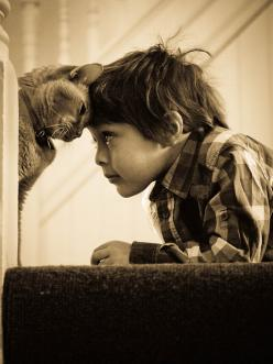 "The boy and the cat...   Well I'd rather say  ""A meeting of two minds."": Cats, Photos, Animals, Head Bump, Head Boop, Best Friends, Pet, Children, Boy"