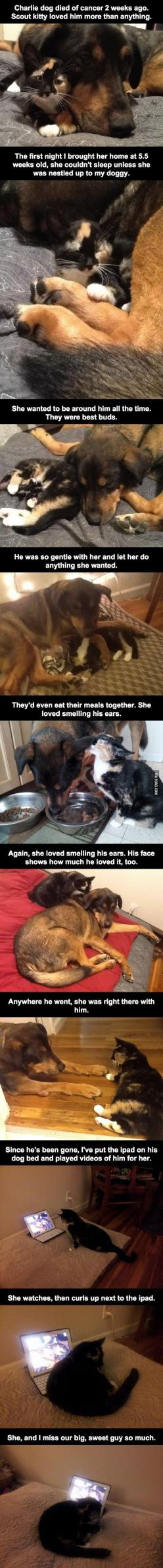 The feels...THE FEELS!!!!!!! D: *sniff* Now I need a new heart...because this one's broken!!! D:   His Dog Died Of Cancer 2 Weeks Ago. The House Cat's Reaction Was Heartbreaking.: Dogs And Cats, Animals ️, Heart Breaks, Kitty Feels, House Cat S, Anima