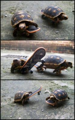 Two turtles riding on miniature skateboards. @Mallory Beatty: Tortoise, Animals, Stuff, Skateboarding Turtles, Funny, Things, Ninja Turtles