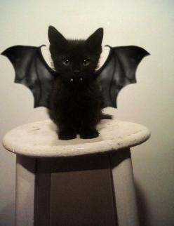 Vampire Cat: Batcat, Cats, Animals, Vampire, Bats, Kitty, Black Cat, Halloween