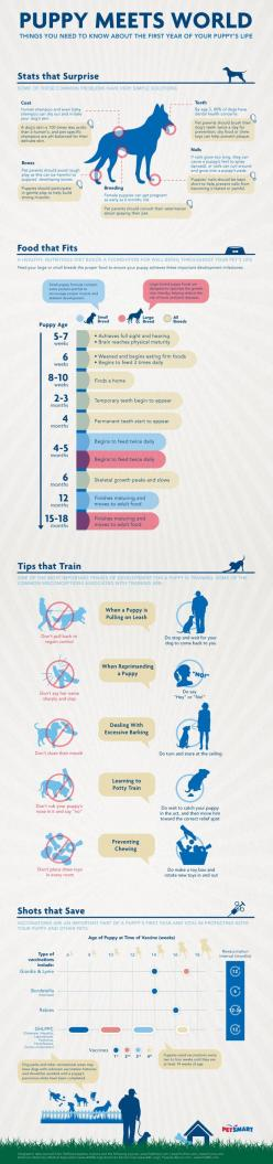 what you need to know about the first year of your puppy's life: Dogs, Dog Infographic, Puppy Owner, Puppys, Puppy Meets, Puppy Training Tip, Animal