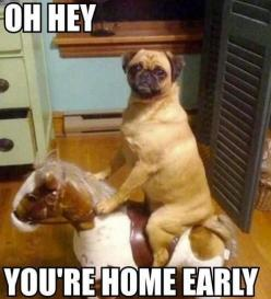 What Your Dog Does While You're At Work: Animals, Dogs, Horse, Funny Stuff, Funnies, Funny Animal