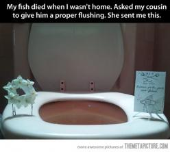 Why did I never have a roomie with a sense of humor like this? Love it: Funeral My, Fishy Funeral, Best Friends, Funeral I, Funny Toilet Fish Funeral, Funeral For, Funny Fish, Awww She S, Proper Flushing