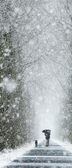 Winter Walk II | CostMad do not sell this idea/product. Please visit our blog for more funky ideas: Winter Snow, Winter, Walks, Winter Wonderland, Seasons Winter