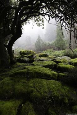 With the feeling of the cool dampness against my skin, and still greeness that hung in the air...: Forests, Enchanted Forest, Nature, Beautiful, Moss, Places, Mustafa Akarsu, Landscape