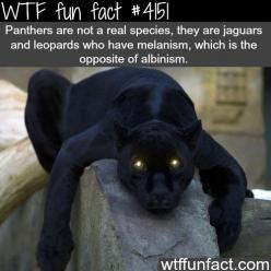 WTF Facts : funny, interesting & weird facts: Wtf Funfacts, Wtffunfacts Creepy, Wtf Fun Facts, Interesting Fun Facts, Facts Wtffunfacts, Interesting Facts, Wtffunfacts School, Panthers, Animal