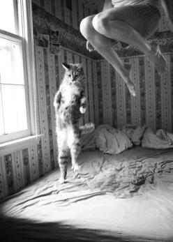 """""""The meeting of two personalities is like the contact of two chemical substances: if there is any reaction, both are transformed."""" - Carl Jung: Cats, Picture, Animals, Bed, Funny, Things, Kitty, Photography"""