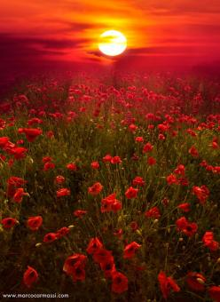 35 Beautiful Outstanding Photos of Landscape Photography: Red, Nature, Sunsets, Beautiful, Landscape, Doll, Photo, Flower