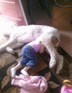 50 Toddlers Who Are Best Friends With Their Dogs// I can only hope Jessie is this tolerant one day!: Animals, Girl, Dogs, Pets, Personal Space, Funny Stuff, Funnies, Photo, Kid