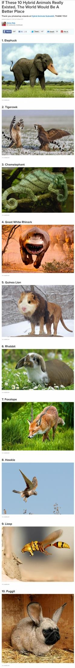 56610.jpg (460×4057): Animals, Guinea Lion, Stuff, Awesome, Funny, Funnies, Humor, Animal Hybrids