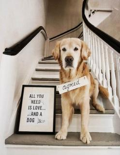 "agreed. When Barkley will ""pose"", I'd love to take a picture of this and frame it for my ""Craft Room"".: Animals, Dogs, Quotes, Pets, So True, Puppy, Things, Friend, Golden Retriever"