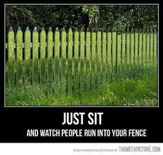All that grass reflected on the fence...