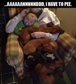 always such a problem except I just have baby Graham and one dachshund, Miss Lucy!!  LOL!!: Animals, Dogs, Dachshund, Doxie, Funny Picture, Funny Stuff, Funnies, Things