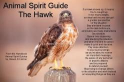 Animal Totems are private to each individual and should not be shared. They come to you because you need them, although you may not know it at the time. However, I WILL share that the redtailed hawk in one of my totems..and comes when I need to hear it&#3