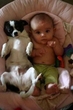 Baby see, baby do. Best buddy's: Babies, Animals, Dogs, Pet, Funny, Puppy, Kids, Baby, Friend