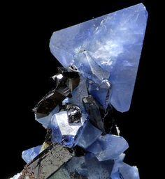 Benitoite and Neptunite, California USA: Rocks Gems Crystals, Crystals Rocks Gems Fossils, Minerals Gemstones Crystals, Stone Gems Minerals Crystals, Jewelry Gems Stones Rocks, Rocks Crystals Minerals, Crystals Rocks Minerals Gems, Gemstones Minerals Crys