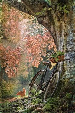 bycicle in the woods: Bicycles, Nature, Bikes, Art, Country Life, Place, Photo, Tree Of Life