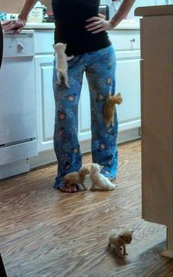 Can this be my life?: Cats, Animals, Funny, Crazy Cat, Kittens, Kitty, Cat Lady