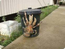 Coconut Crab, can't believe this is real!: Animals, Nature, Stuff, Funny, Coconut Crabs, Coconutcrab, Giant Coconut