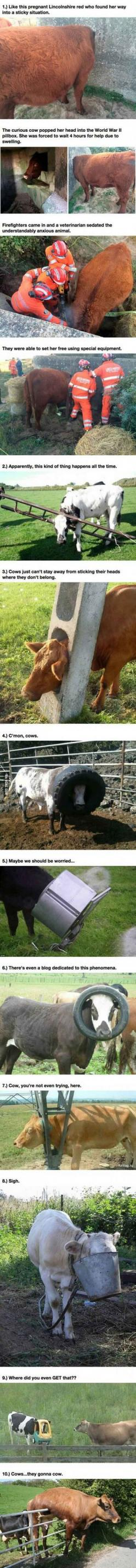 Cows I CANT EVEN: Farm, Funny Animals, Funny Things, Gonna Cow, Cows Gonna, Funny Stuff, Cows They Gonna, Funny Cows