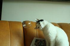 Diggle tries to have a meaningful conversation with whatever-the-hell-that is.  She's pretty sure it's a UFO.  ~~ Houston Foodlovers: Animals, Funny Cats, Cute Pets, Curious Cat, Orange Cats, Bubble Cat, Oooh Bubbles, Photo