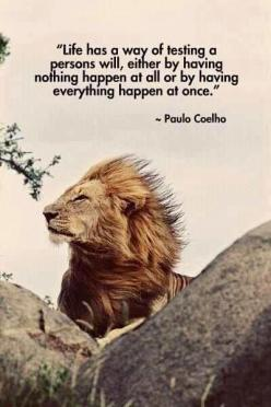 For the highest rated Quotes on the Web visit http://svpicks.com/inspirational-quotes/: Lion, Animals, Life, Inspiration, Quotes, Truth, Paulo Coelho, Leo