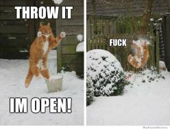 Fudge.: Cats, In Open, Animals, Snowball, Funny Stuff, Funnies, Humor, Funny Animal