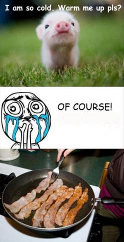 Fun Claw - Funny Cats, Funny Dogs, Funny Animals: Funny Animal Pictures With Captions - 21 Pics: Funny Picture, Funny Stuff, Bacon, Humor, Funnies, Things, Funnystuff, Animal