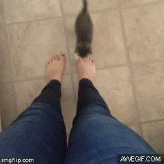 ✄ Funny cats - part 75 (35 pics + 10 gifs ), funny cat gif, cat gif, cat on gif