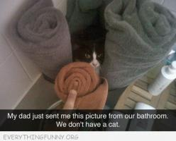 http://everythingfunny.org: Cats, Picture, Giggle, Animals, Awesome, Funny Cat, Funny Stuff, Don T, Funny Animal