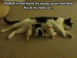 Hungry Kittens: Cats, Animals, Picture Day, Funny Pictures, Funnypictures, Dump A Day, Funnies, Funny Animal
