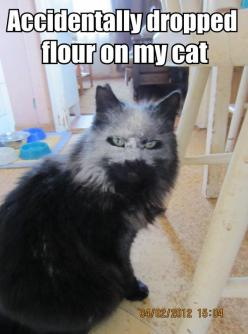 I laughed at this far far too much!: Cats, Animals, Giggle, Dropped Flour, Funny Stuff, Funnies, Accidentally Dropped, Cat Lady