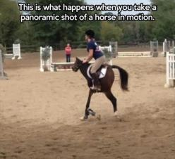 i laughed harder than i properly should have: Picture, Fail, Panoramic Photos, Horses, Funny Stuff, Panoramic Shot, Funnies, Landscape