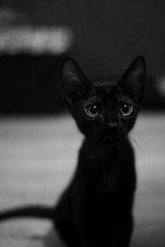 i want a black cat