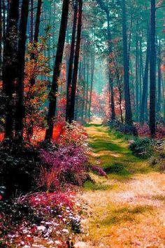 Magical Forest, Poland. Its so pretty!
