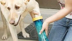 No More Tipped Over Bowls Of Muddy Water Trying To Clean Your Dogs Paws.: Brushless Dog, Dog Paws, Full Bath, Dogs Feet, Paw Wash, Completely Muddy
