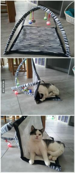 Our cat doesn't understand the new toy...: Funny Animals, Zee Animals, Cat Doesn T, Toy, Cat Humor, Meow Mixes