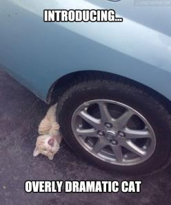 Overly Dramatic Cat…: Cats, Funny Cat, Funny Picture, Funny Animal, Cat Lady