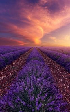 ~~Sensual Fire | sunset falls upon a lavender field, Provence, France by Alexandre Ehrhard~~: Sensual Fire, Nature, Lavender Fields, Sunset, Beauty, Landscape, Place, Photo
