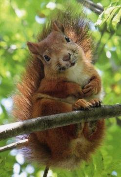 squirrel: Animals, Critters, Sweet, Squirrels, Adorable Squirrel, Red Squirrel, Box, Things, Photo