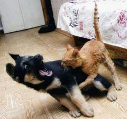 The ambush.: Cats, Animals, Dogs, Pet, Funny Stuff, Humor, Funnies, Funny Animal