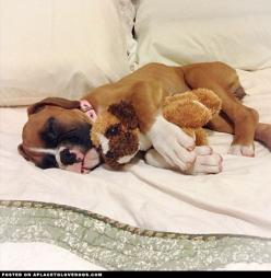 The Cutest Things On The Web! • Hi! Your blog makes me smile a lot ...: Boxer Dogs, Boxerdogs, Boxer Puppies, Boxers Happiness, Animal Boxer, Puppys, Animals Boxers, Boxer Puppy I M, Boxers Friends