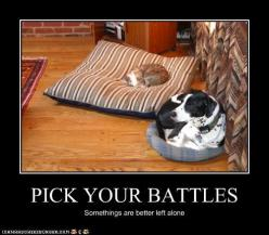 this actually happened in my home once.  The Chihuahuas pee'd on my big girl's bed and her 50 lb shepherd mixness had to curl up on the cat's bed instead.: Cats, Animals, Dogs, Pet, Funnies, Pick, Funny Animal