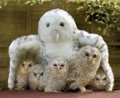 Totally cute they must have lost their mother. Good thing the stuffed owl is there, it seems to be comforting them.: Owl Family, Babies, Animals, Mothers, Baby Owls, Families, Birds, Photo, Mom