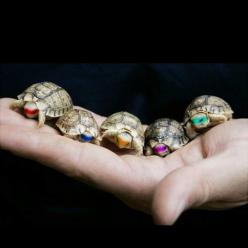 turtles.. ninja turtles!: Mutant Ninja, Animals, Teenage Mutant, Stuff, Ninjaturtles, Things, Ninjas, Ninja Turtles, Baby Turtles