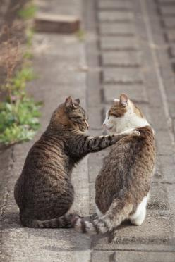 """Don't worry, Bro. I got your back."": Cats, Kitten, Animals, Friends, Seiji Mamiya, Pets, Chat, Kitty"