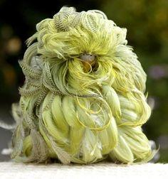 """Whipper"" is a mutant parakeet with long curly feathers. ...Watch video - you won't believe it!: Curly Feather, Parakeets, Budgies, Genetic Mutation, Birds, Long Curly, Mutant Parakeet, Animal"